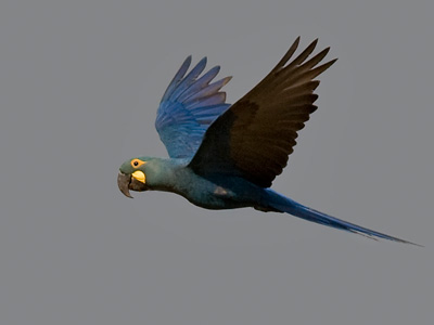 Birds of north-east Brazil